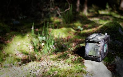 Petit animal abandonné dans les bois