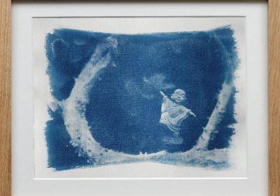 Cyanotypes - Sagesse