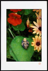 Fleurs et feuille