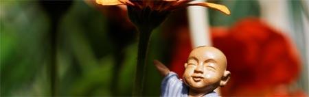 Petit moine, fleurs