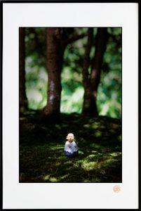 Forêt de bonzaïs